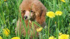 Какая порода собак самая добрая