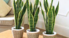 Как установить свет над комнатными растениями