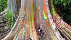 Самые редкие растения на планете