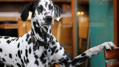 Какие документы нужны для перевозки собаки в поезде