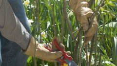 Как выбрать садовые перчатки