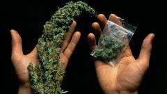 Может ли общий анализ крови определить наличие марихуаны