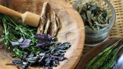Как лечить кашель травами