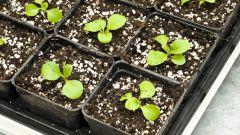 Как сажать семена для рассады