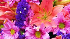 У каких цветков женские имена