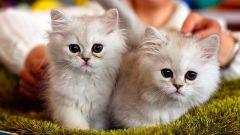 Какие документы нужны для участия в выставке кошек