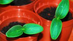 Как сажать семена в горшочки