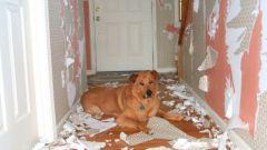 Нюансы в ремонте для владельцев непослушных животных