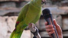 Какой попугай говорит лучше всех