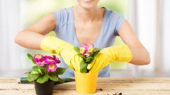 Какие цветы лучше всего для дома