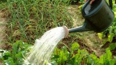 How to water vegetables in the garden