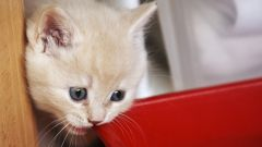 Cat names: how to call a British cat