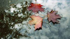 Как узнать об изменении погоды по приметам