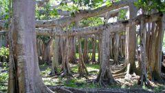 Как видоизменяются корни растений
