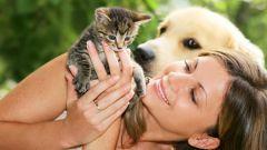 Передаются ли кошачьи болезни человеку