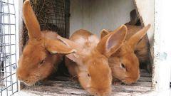 Как обработать клетки кроликов