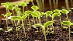 How to use potassium chloride as a fertilizer