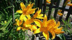 Как пересадить цветы на даче