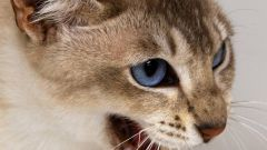 Какими болезнями можно заразиться от кошек