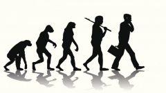 Как называется явление, обратное эволюции