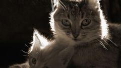 Как часто кошка может приносить приплод