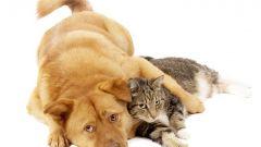 Эффективные способы избавиться от запаха кошки/собаки в квартире