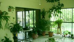 Какие растения разместить в доме по фен-шуй