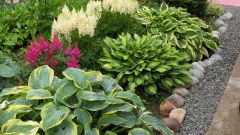 Popular perennials for the garden