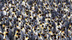 Популяция как элементарная единица