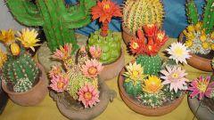 Можно ли дарить кактусы