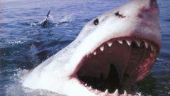 Как уцелеть при встрече с акулой