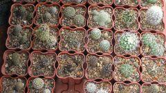 Как выбрать горшок для кактусов