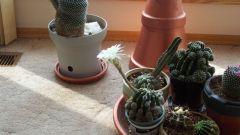 Что полезно для кактуса