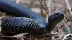 Как убегать от змей