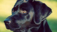 Как собака находит дом