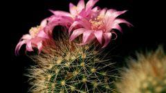 От чего защищает кактус