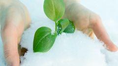 Как спасти деревья от заморозков