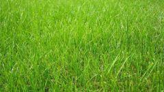 Как сеять траву Канада Грин