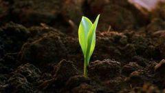 Какая почва называется чернозем