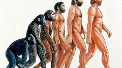 Что значит эволюция