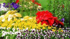 Как оформить цветочную клумбу