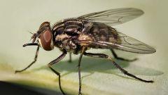 Как бороться с мухами в городской квартире