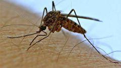 Что делать, чтобы комариный укус перестал чесаться