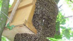 Как сделать и установить ловушку для пчел