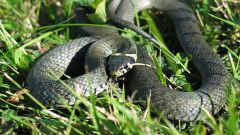 Как избежать нападения змеи