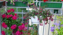 Как разбить цветник на балконе