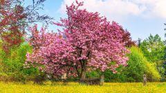 К чему видеть во сне деревья