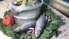 Как солить рыбу самому