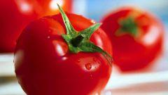 Как обрабатывать семена томатов