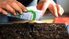 Как посеять семена  цветов